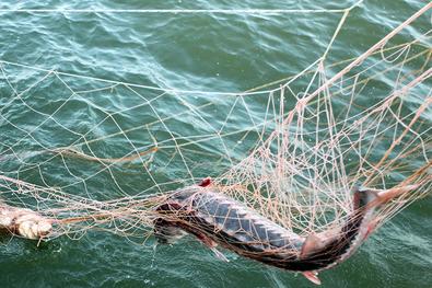 Технология блокчейн в рыболовстве